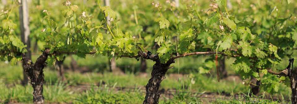 Séminaire Autour du vin